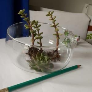 bình thủy tinh làm terrarium