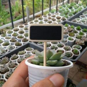 phụ kiện terrarium