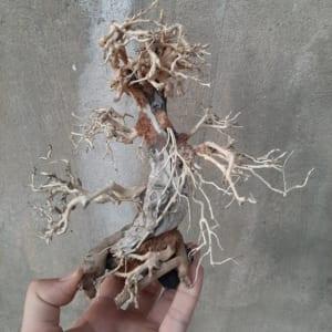 Lũa bonsai