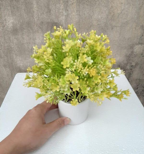 Cây hoa nhựa